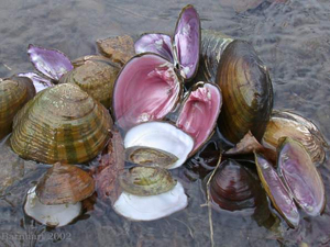 Museum curator co-authors new paper on knowledge shortfalls and conservation of freshwater mollusks
