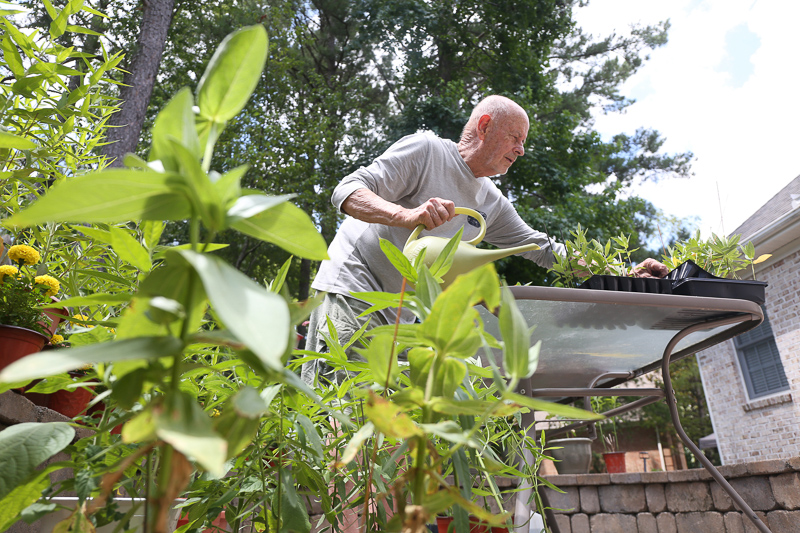 David Gagnon tends to milkweed plants.