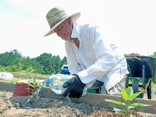 Monarch Meadow: Butterfly conservation effort spreads its wings