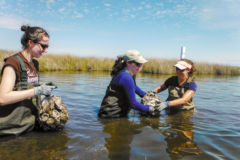 AmeriCorps members hip-deep in the water of an estuary with bags of bivalves.