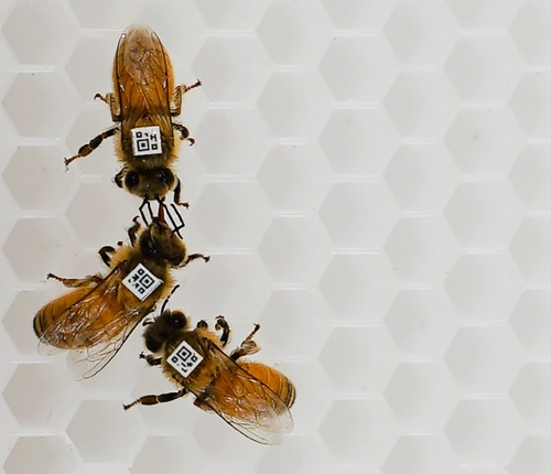 Three bees with little number jackets on