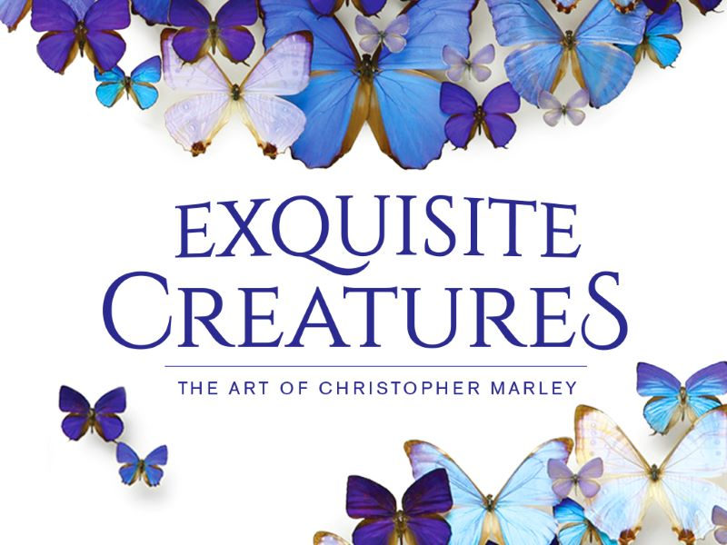 Blue Morphos surrounding exhibit logo: Exquisite Creatures: The Art of Christopher Marley