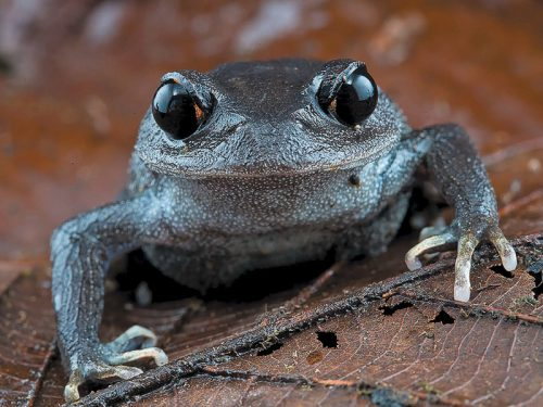 Museum herpetologist wins 2021 E.O. Wilson Research Prize