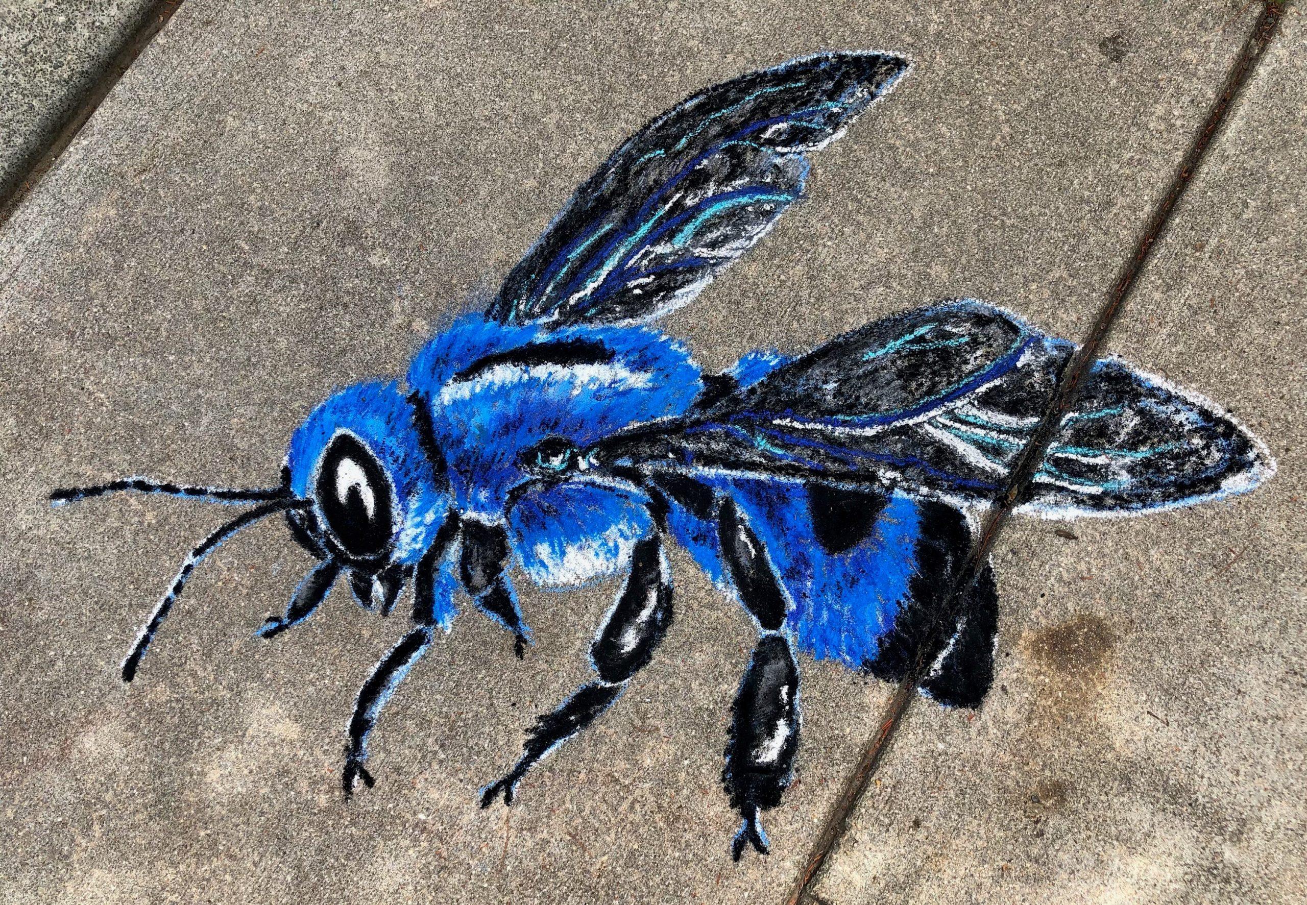 A chalk blue carpenter bee