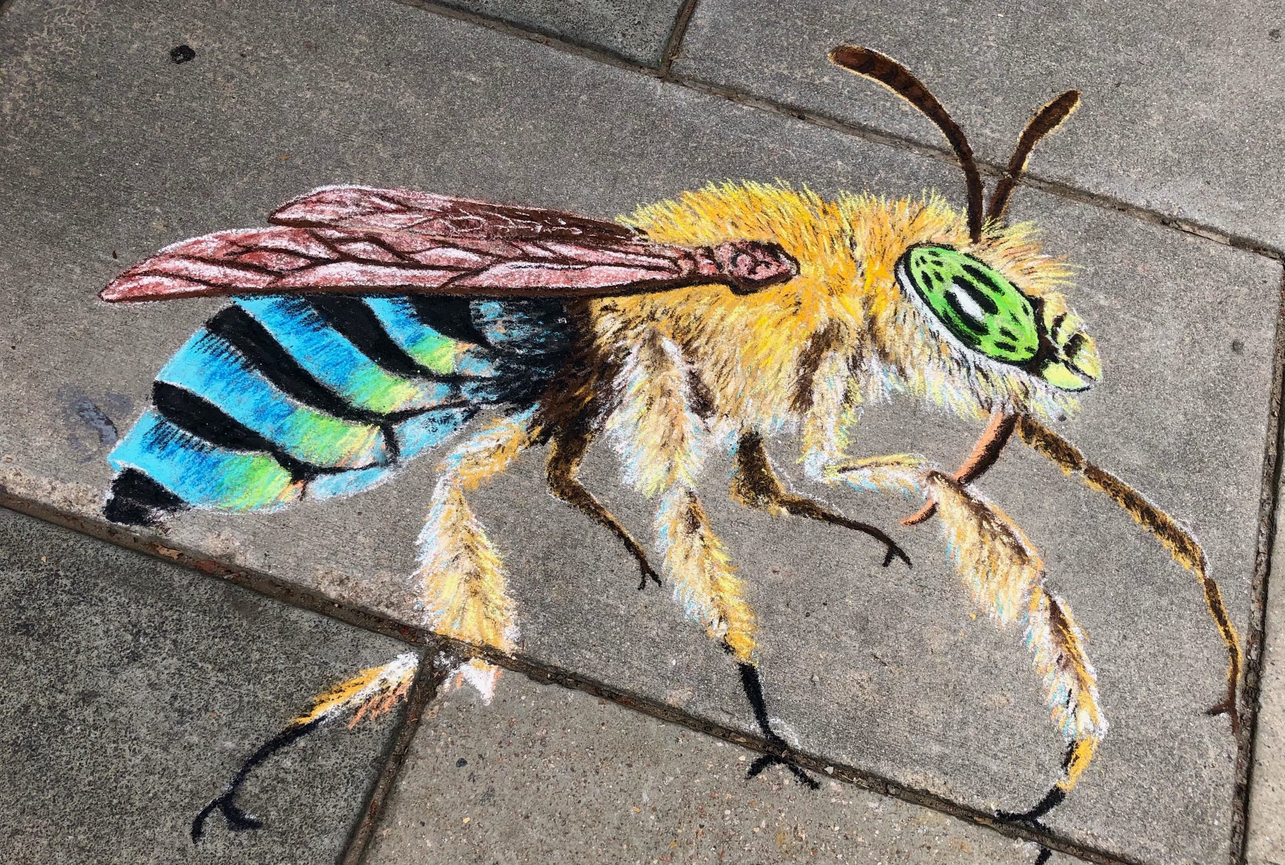 A chalk blue banded bee