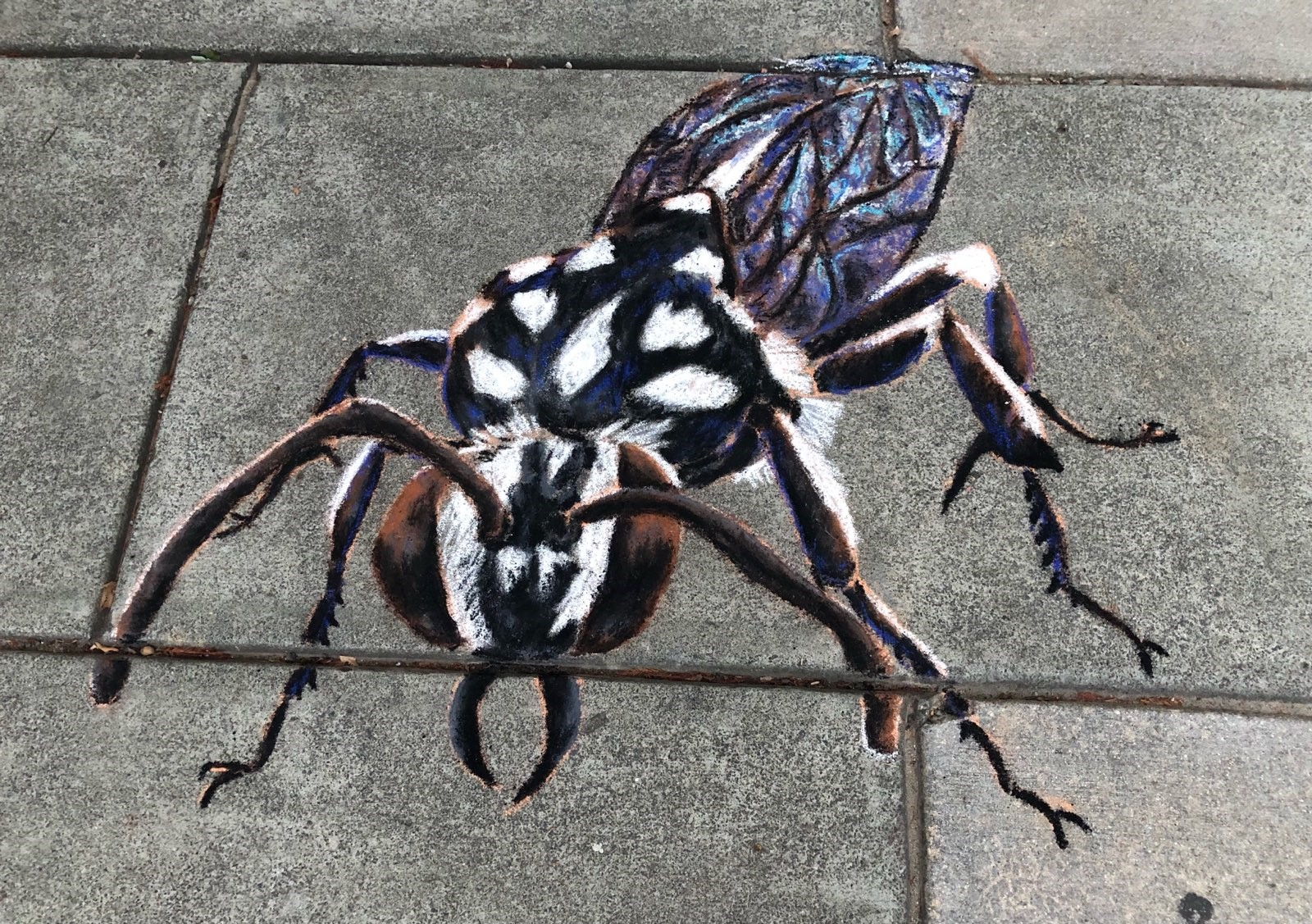 A domino cuckoo bee in chalk