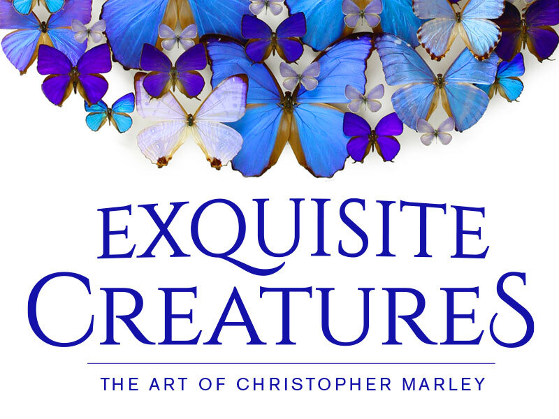 Exquisite Creatures: the Art of Christopher Marley.