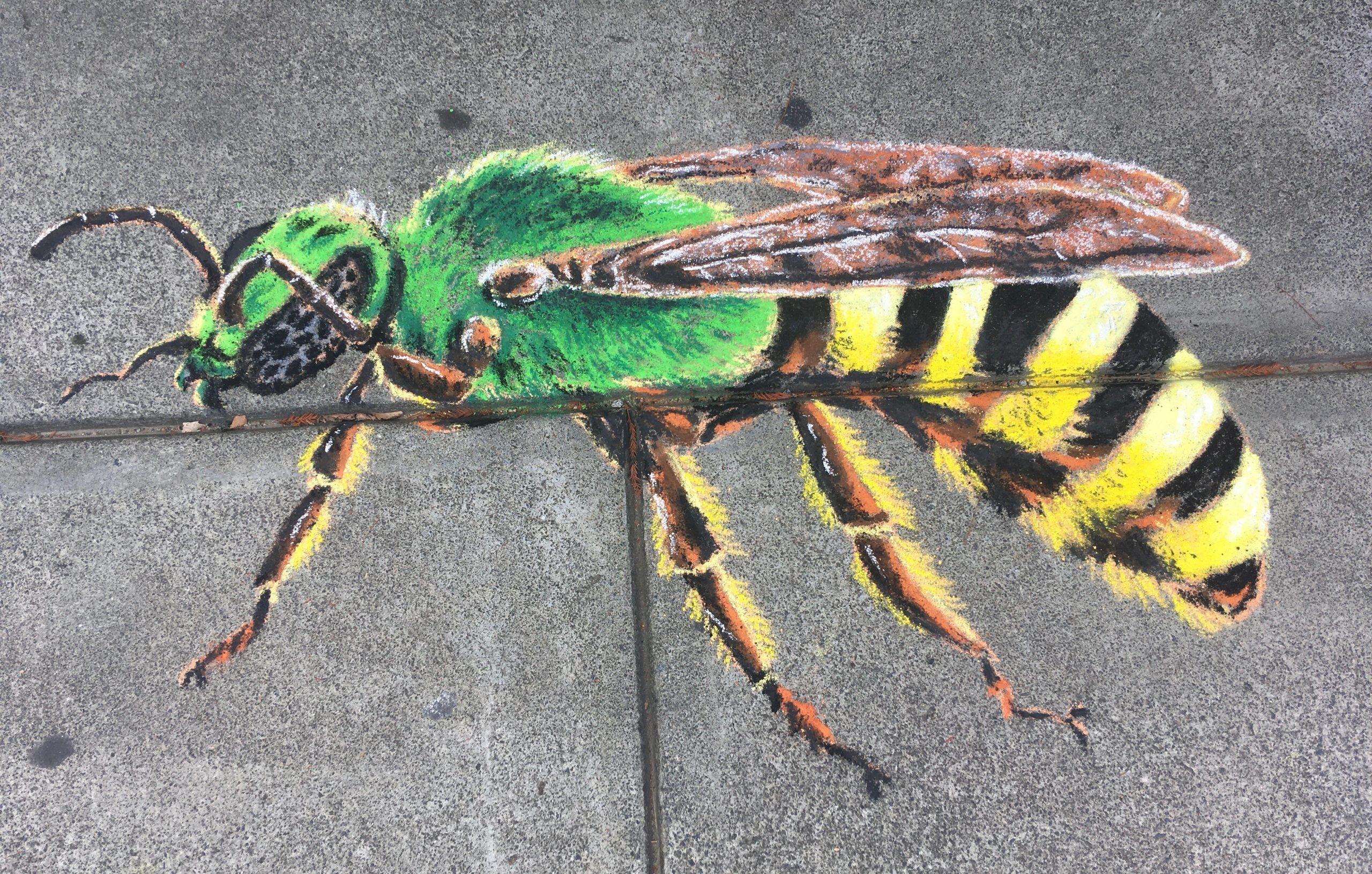 A chalk green sweat bee