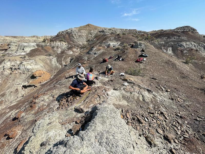 The team excavates a duckbill dinosaur in the San Juan Basin (New Mexico).