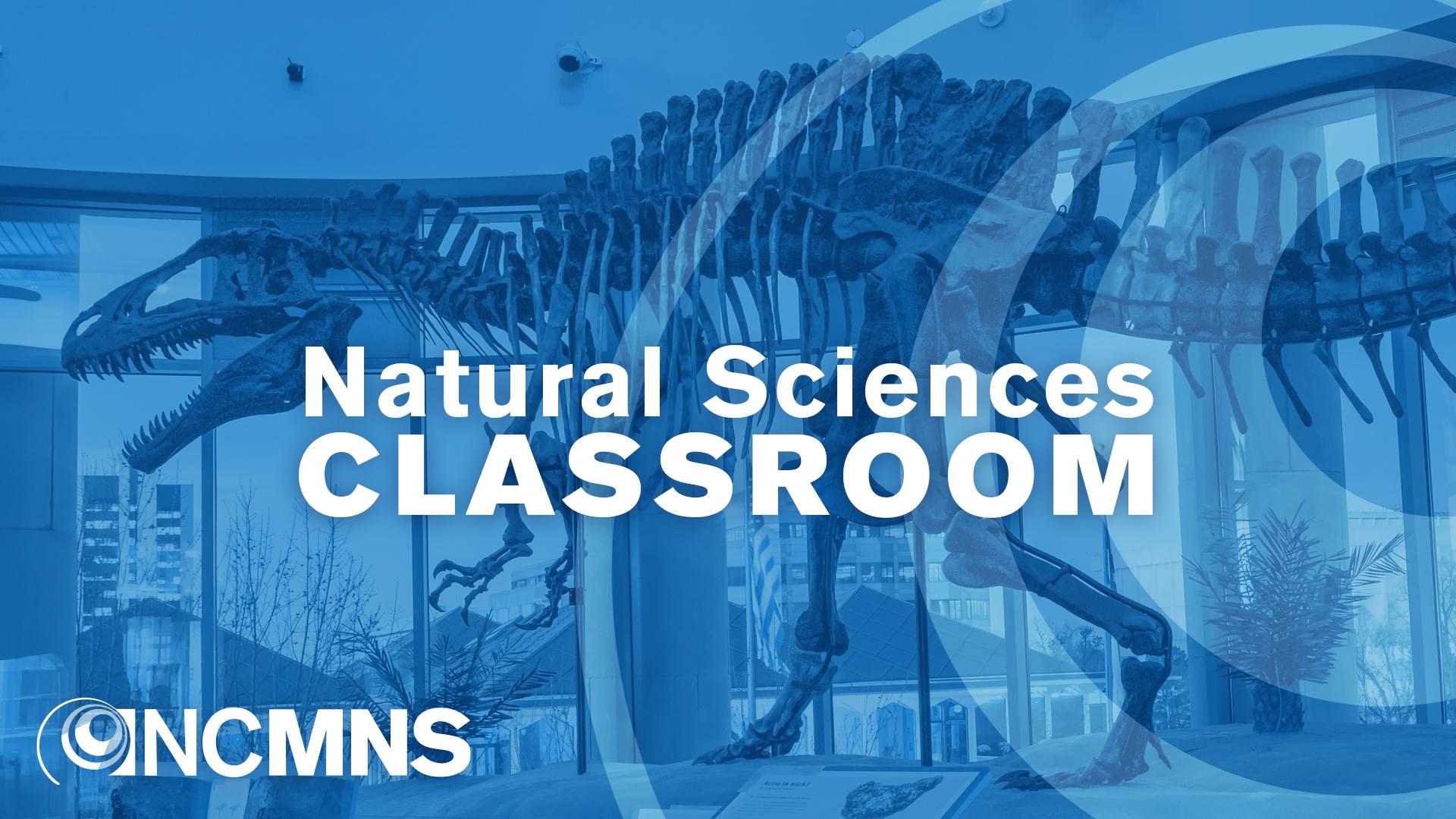 Natural Sciences Classroom