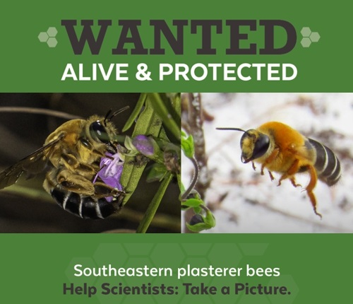 Two bees and text stating wanted alive and protected