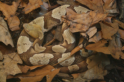 Snakes of North Carolina