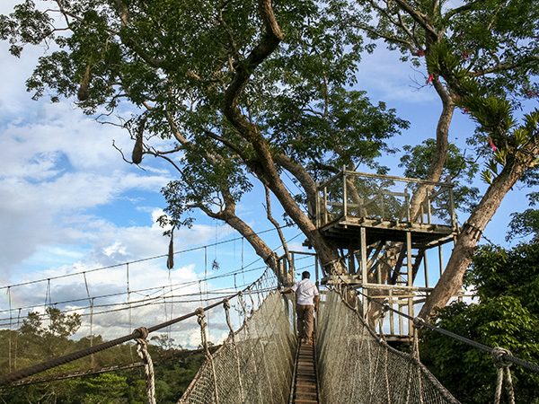 Amazon canopy walk. Photo: Megan Davis/NCMNS.