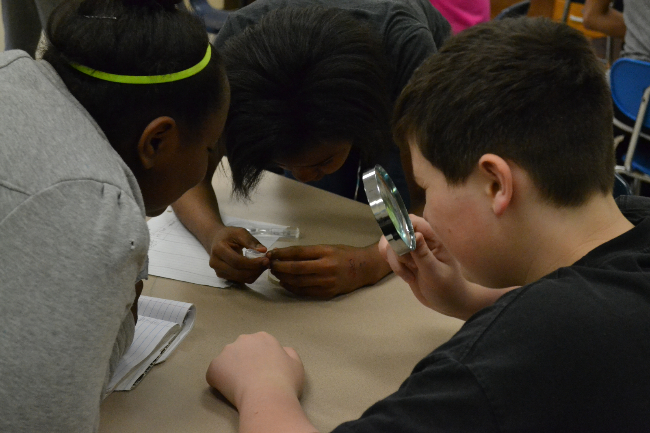 Students examining American shad eggs (Cedar Creek Middle School)