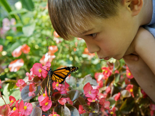 Boy with Monarch butterfly (U.S. Fish and Wildlife Service)