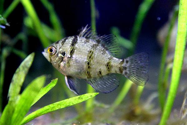 fish and invertebrates