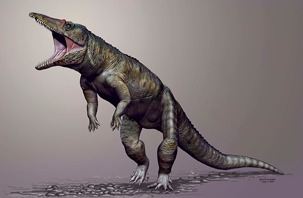 Artist reconstruction of <em>Carnufex carolinensis</em>, an ancient crocodylomorph that roamed North Carolina 231 million years ago.