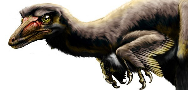 Artist reconstruction of the North American raptor dinosaur Talos sampsoni, named by Zanno and colleagues in 2011. Credit: J. Gonzales