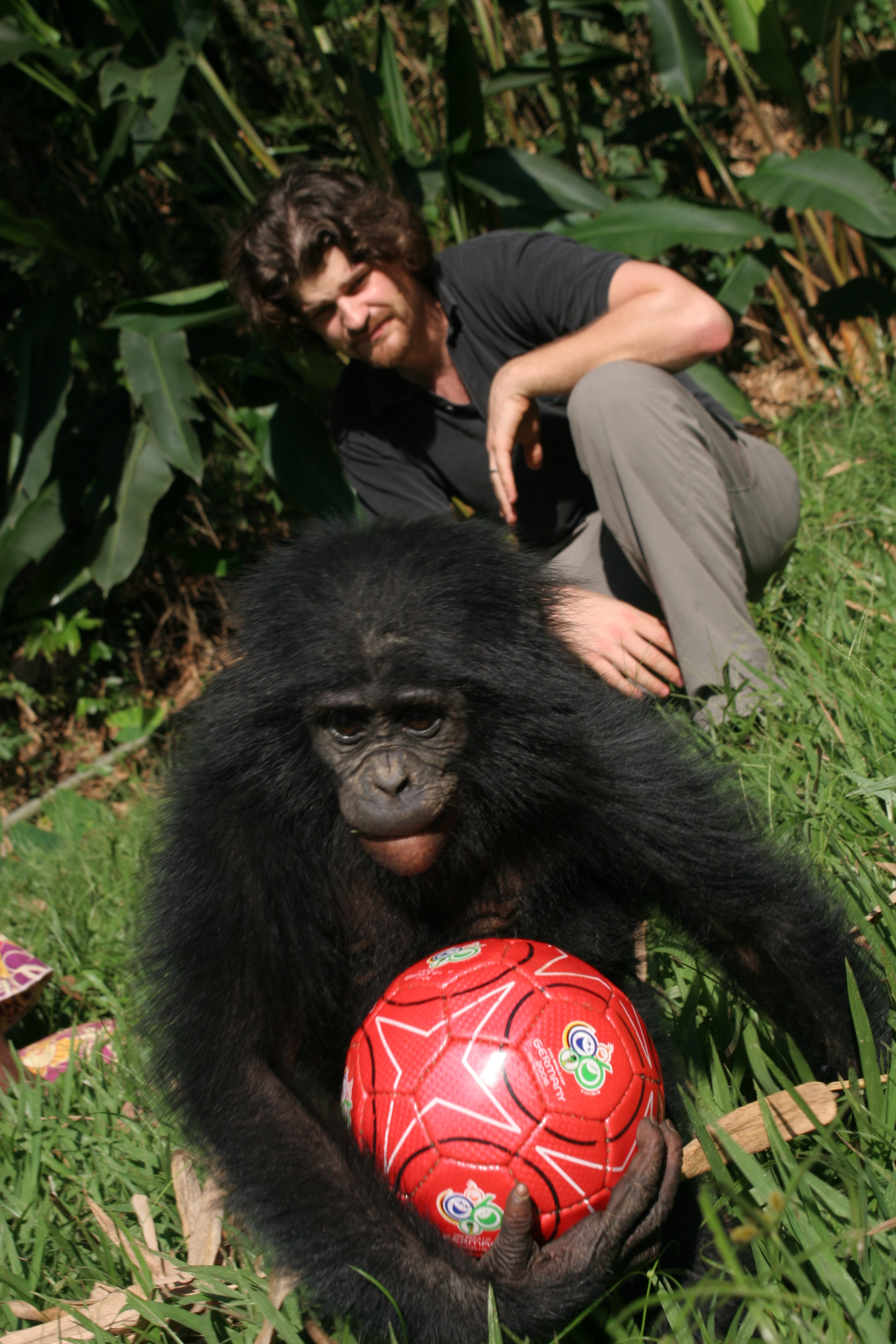 Brian Hare conducting behavioral experiments with bonobos at the rescue center.