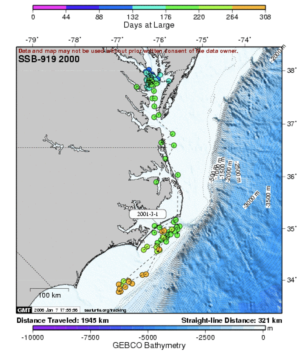 Tracks of Josephine from 2001 showing her overwintering habitat off Cape Hatteras and along the warm waters at western edge of the Gulf Stream.