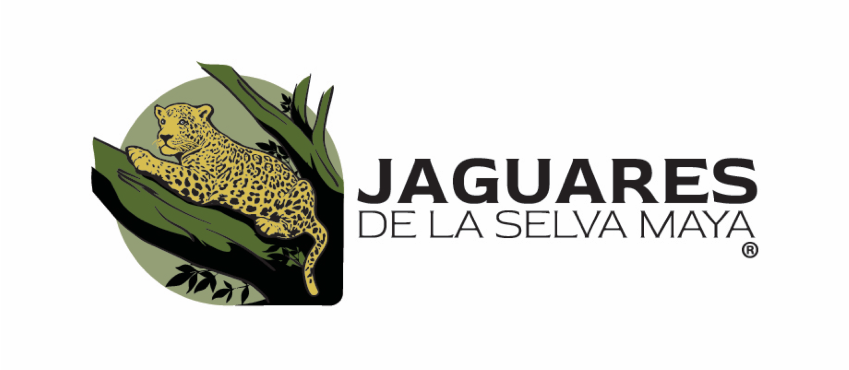 Pacman is one of many jaguars studied as part of a research project in la Selva Maya of Mexico.